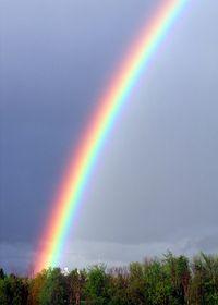 Rainbow-too