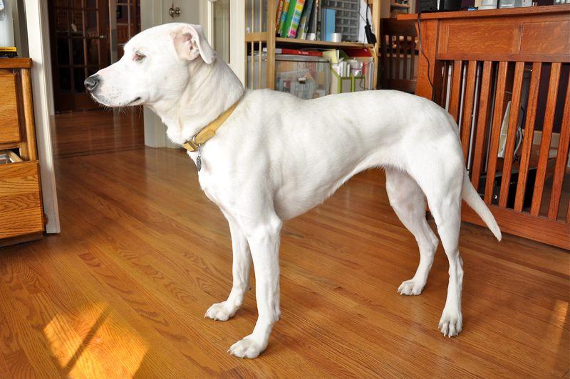 Sweet Pea Profile