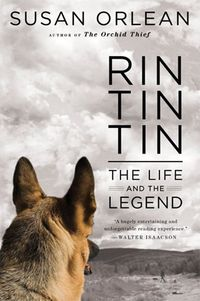 Rin-tin-tin-medium